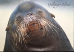 Postcard Monday - Galapagos Islands and a lesson on sea lions versus seals