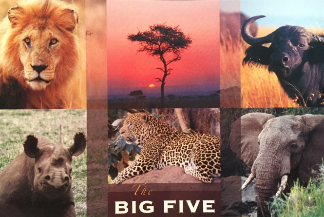 Postcard Monday - Do you know the big five?