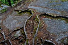 Roots create a geometric work of ark over a rock canvas